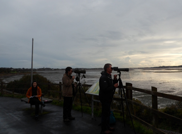 Counting Oystercatchers